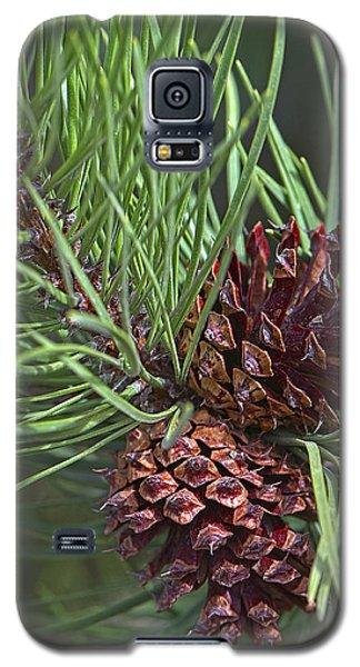 Ponderosa Pine Cones Galaxy S5 Case by Sharon Talson