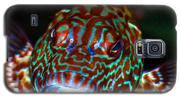 Galaxy S5 Case featuring the photograph Poopaa Hawaiian Hawk Fish by Lehua Pekelo-Stearns