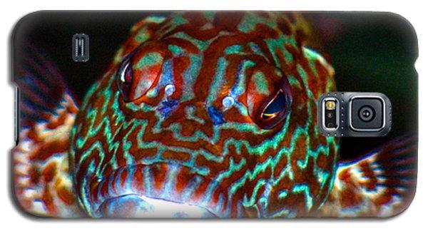 Poopaa Hawaiian Hawk Fish Galaxy S5 Case by Lehua Pekelo-Stearns