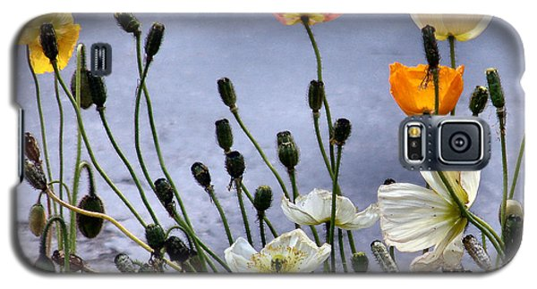 Poppies Galaxy S5 Case by Dana Patterson
