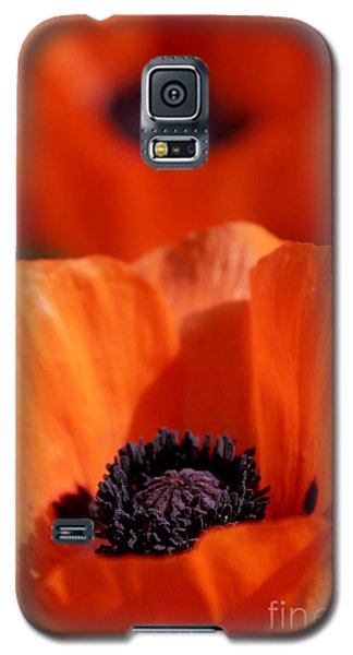 Galaxy S5 Case featuring the photograph Poppies In Sunlight by Lincoln Rogers