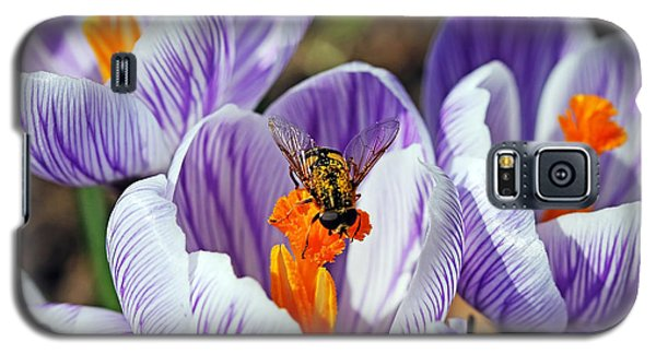 Galaxy S5 Case featuring the photograph Popping Spring Crocus by Debbie Oppermann