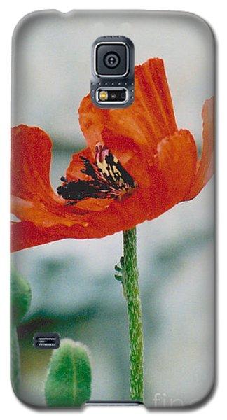 Poppy - 1 Galaxy S5 Case