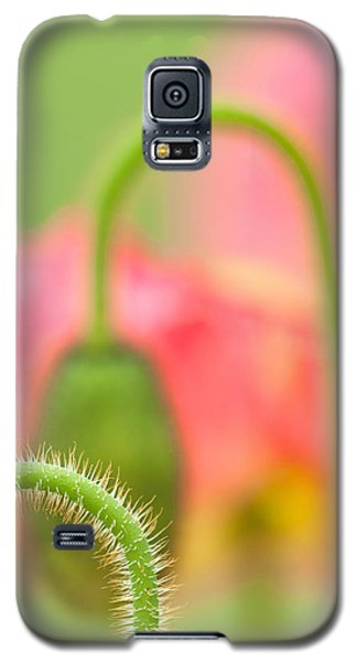 Poppy Arches Galaxy S5 Case by Joan Herwig