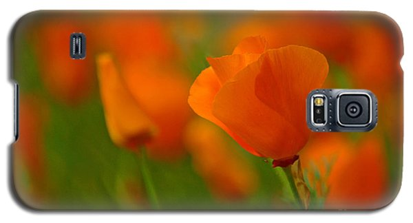 Galaxy S5 Case featuring the photograph Poppy Art by Nick  Boren
