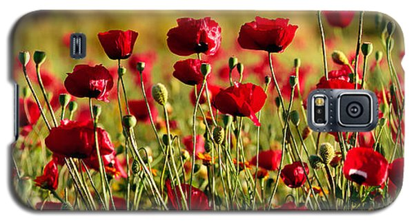 Galaxy S5 Case featuring the photograph Poppy Fields Forever by Uri Baruch