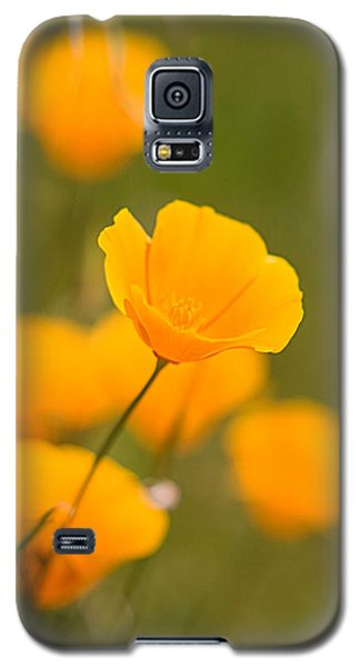 Galaxy S5 Case featuring the photograph Poppy I by Ronda Kimbrow