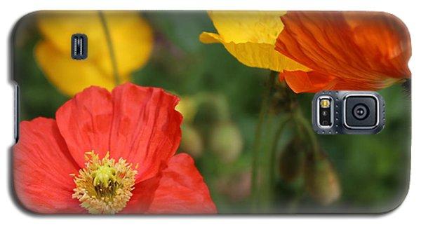 Poppy Iv Galaxy S5 Case by Tiffany Erdman