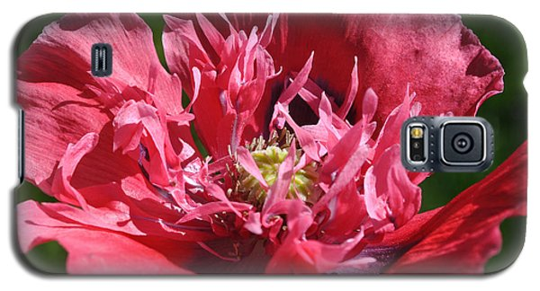 Poppy Pink Galaxy S5 Case by Jim Hogg