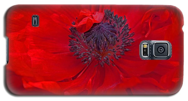 Poppy - Red Envy Galaxy S5 Case by Joanne Smoley