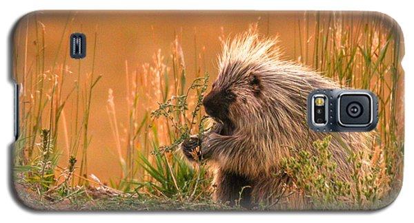 Porcupine  Galaxy S5 Case