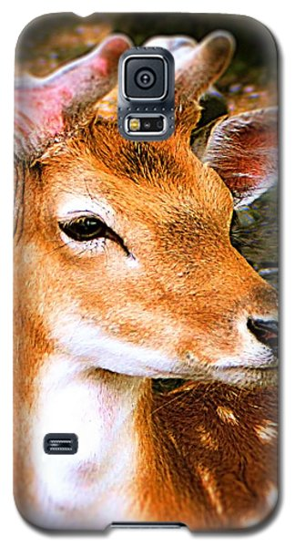 Portrait Male Fallow Deer Galaxy S5 Case