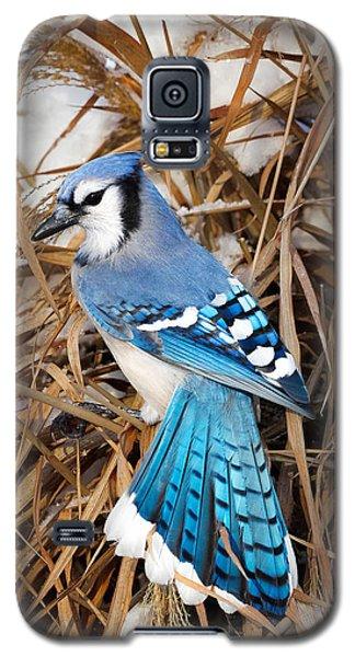Portrait Of A Blue Jay Galaxy S5 Case by Bill Wakeley