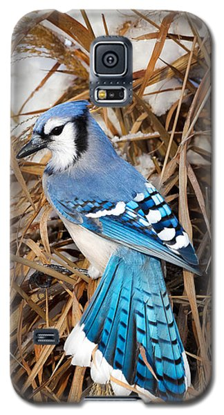 Portrait Of A Blue Jay Galaxy S5 Case