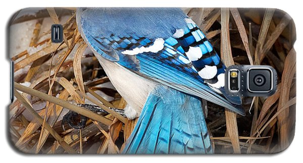 Portrait Of A Blue Jay Square Galaxy S5 Case by Bill Wakeley