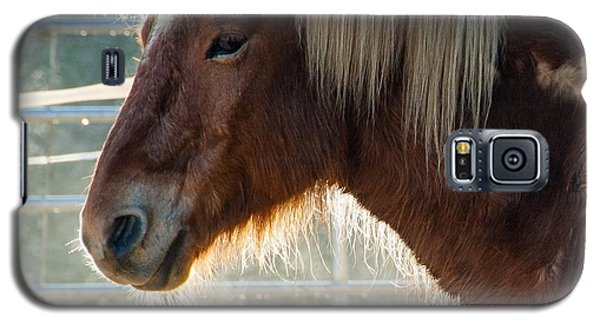 Portrait Of A Brown Horse Galaxy S5 Case by Matthias Hauser