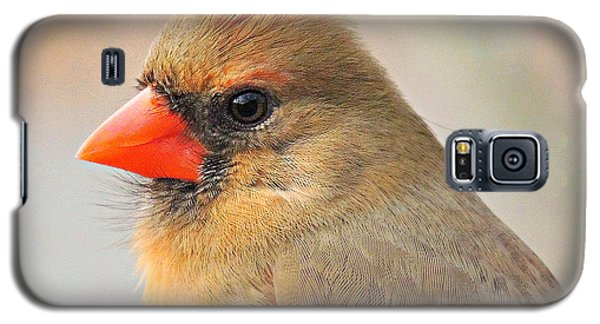 Portrait Of A Cardinal Galaxy S5 Case by Eve Spring