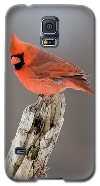 Galaxy S5 Case featuring the photograph Portrait Of A Cardinal by Timothy McIntyre