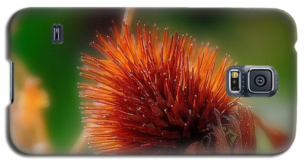 Portrait Of A Cone Flower Galaxy S5 Case