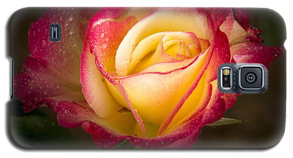 Portrait Of A Double Delight Rose Galaxy S5 Case by Jean Noren