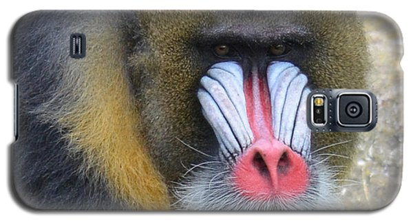 Portrait Of A Mandrill Galaxy S5 Case by Jim Fitzpatrick
