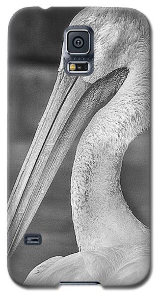 Portrait Of A Pelican Galaxy S5 Case