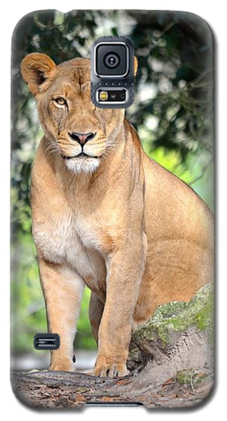 Portrait Of A Proud Lioness Galaxy S5 Case