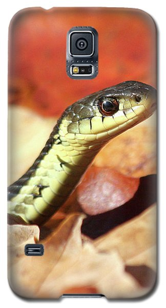Galaxy S5 Case featuring the photograph Portrait Of A Snake by Doris Potter