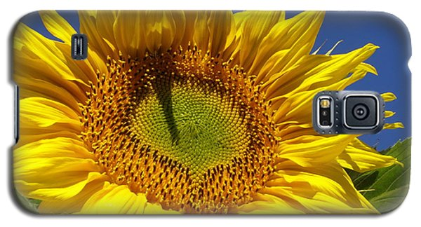 Galaxy S5 Case featuring the photograph Portrait Of A Sunflower by Diane Miller