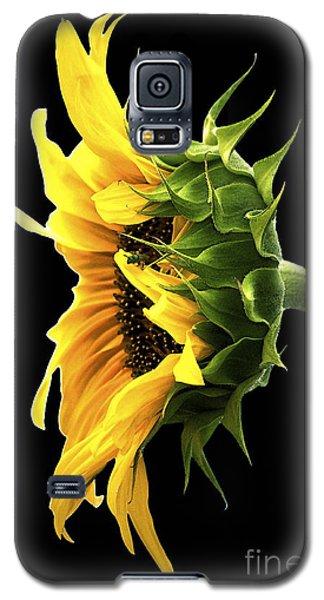 Portrait Of A Sunflower Galaxy S5 Case