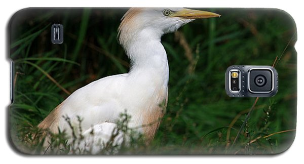 Galaxy S5 Case featuring the photograph Portrait Of A White Egret by Nick  Biemans