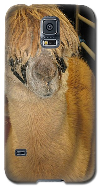 Portrait Of An Alpaca Galaxy S5 Case by Connie Fox