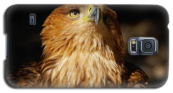 Portrait Of An Eastern Imperial Eagle Galaxy S5 Case