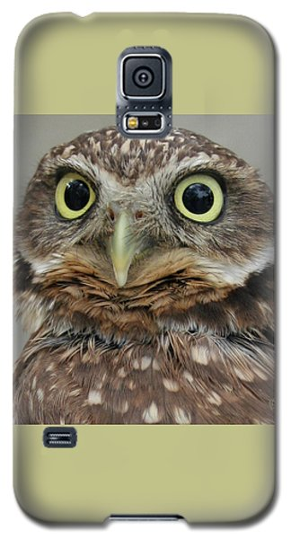 Portrait Of Burrowing Owl Galaxy S5 Case