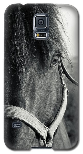Portrait Of Horse In Black And White Galaxy S5 Case