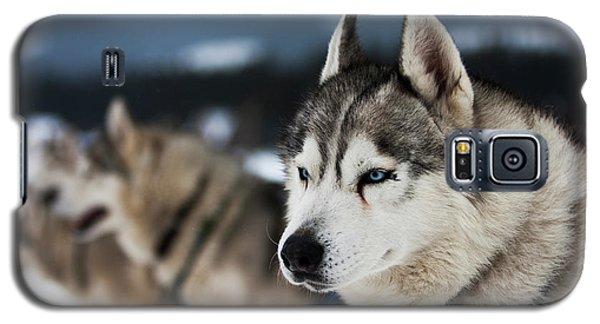 Husky Galaxy S5 Cases | Fine Art America