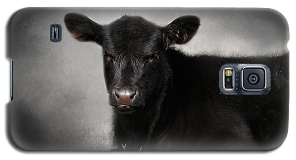 Portrait Of The Black Angus Calf Galaxy S5 Case