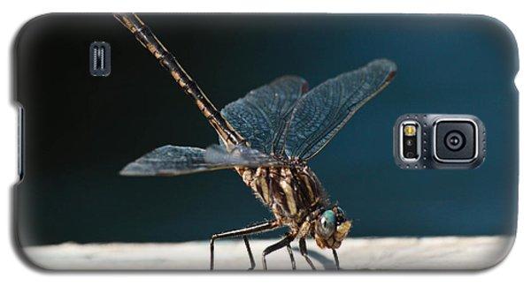 Posing Dragonfly Galaxy S5 Case