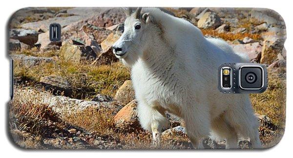 Posing Mountain Goat Galaxy S5 Case