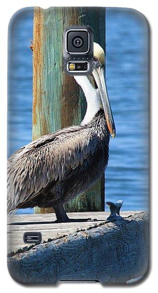 Posing Pelican Galaxy S5 Case