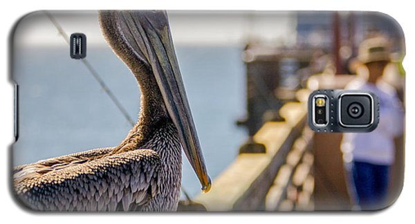 Galaxy S5 Case featuring the photograph Posing Pelican by Robert  Aycock