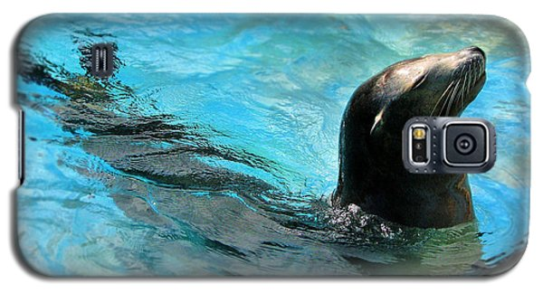 Galaxy S5 Case featuring the photograph Posing Sea Lion by Kristine Merc
