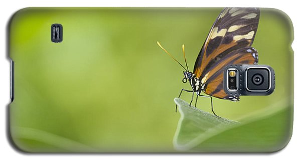 Galaxy S5 Case featuring the photograph Postman On A Leaf by Bryan Keil