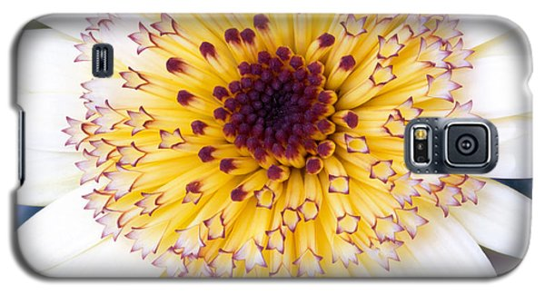 Pot Marigold Citrus Smoothies Galaxy S5 Case