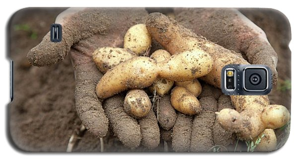 Potato Harvest Galaxy S5 Case