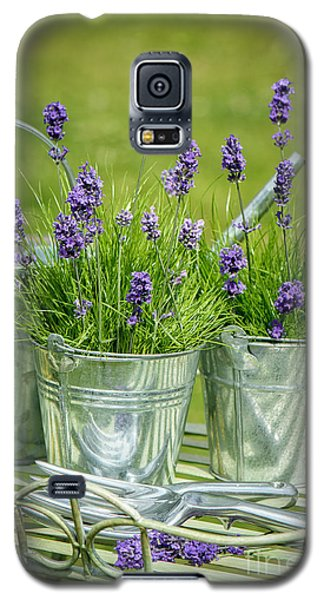Garden Galaxy S5 Case - Pots Of Lavender by Amanda Elwell