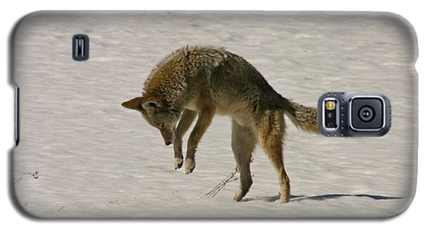 Galaxy S5 Case featuring the photograph Pouncing Coyote by Mitch Shindelbower