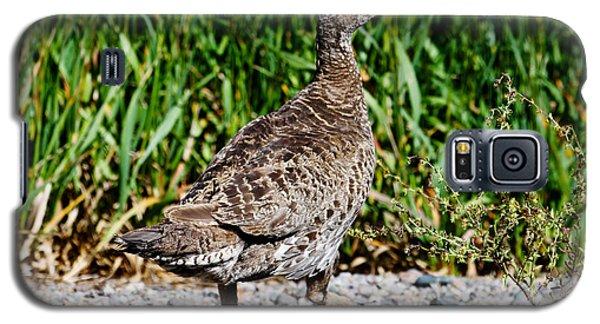 Galaxy S5 Case featuring the photograph Prairie Chicken Run by Janice Rae Pariza