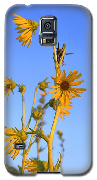 Galaxy S5 Case featuring the photograph Prairie Compass Plant by Ed Cilley
