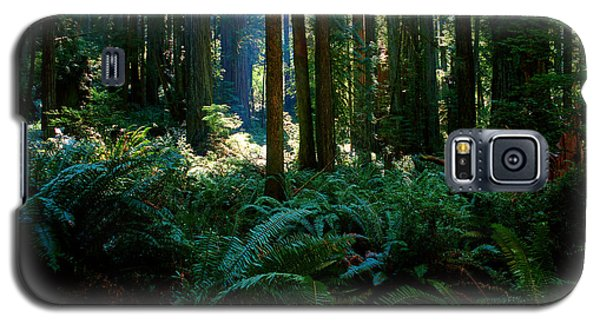 Prairie Creek Redwoods State Park 10 Galaxy S5 Case